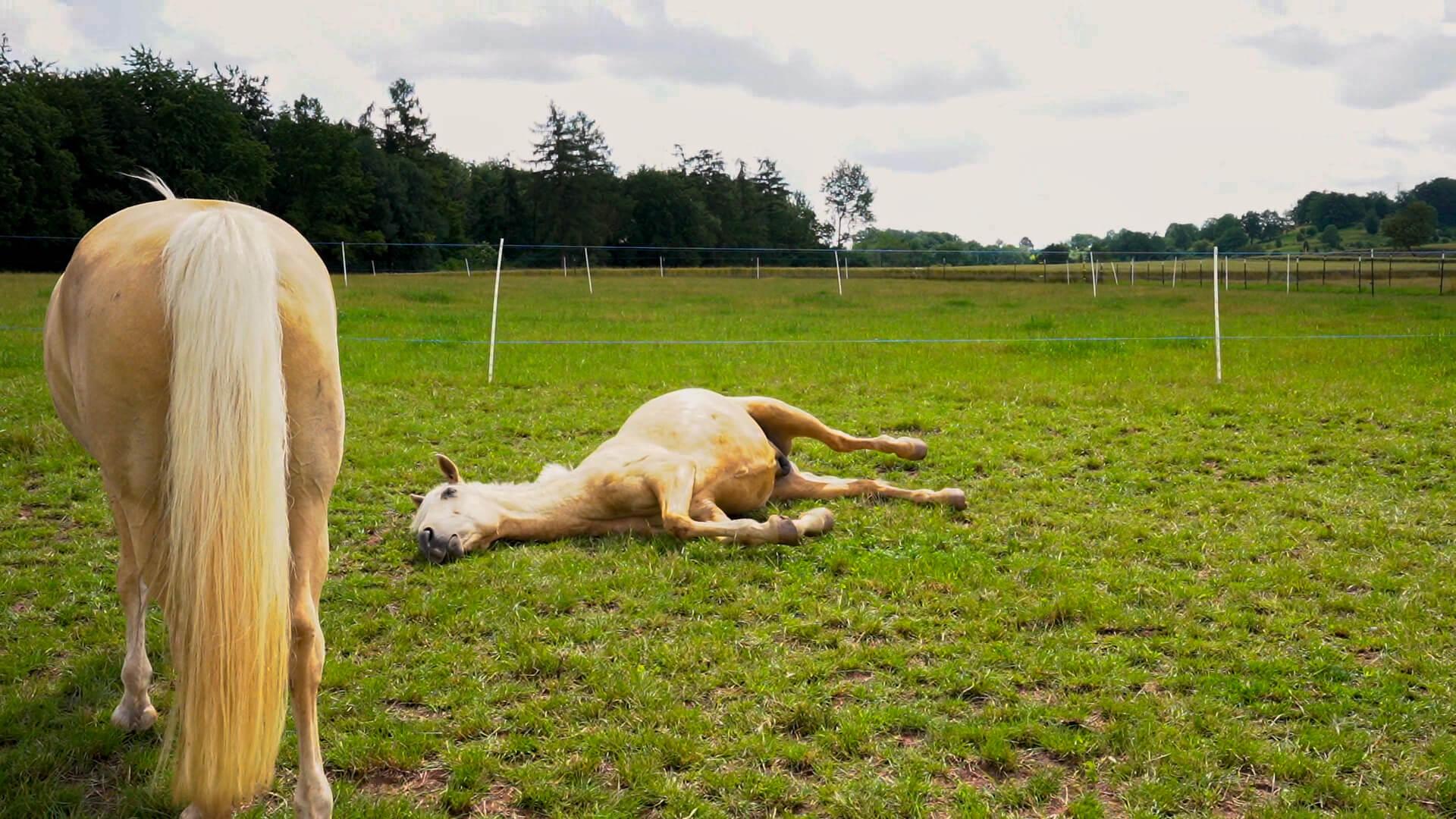 Krankes Pferd, welches eine Op braucht